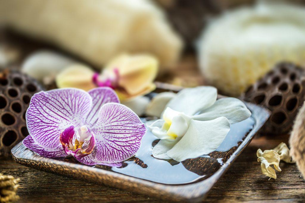 Le piante per il bagno che depurano l aria detto fra noi